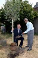 David Alton and Akbar Ali planting an olive tree at the breaking of the new ground for the Habitat for Humanity project in Toxteth in July 2005.