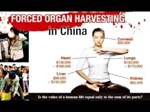 organ harvesting 2