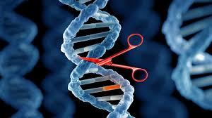 gene editing 3